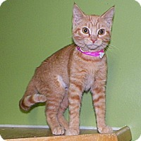 Adopt A Pet :: Ginger - Dover, OH