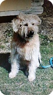Terrier (Unknown Type, Medium) Mix Dog for adoption in Berea, Ohio - Frisco