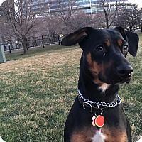 Adopt A Pet :: Ramona*ADOPTED!* - Chicago, IL