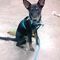 Adopt A Pet :: Mowgli - Palm Harbor, FL