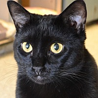 Adopt A Pet :: Peaches - Independence, MO