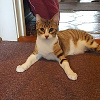 Adopt A Pet :: Caramella (Cara) - Monrovia, CA