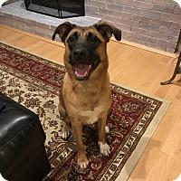 Adopt A Pet :: Rowan - Acushnet, MA