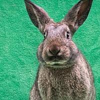 Adopt A Pet :: Hagrid - Baton Rouge, LA