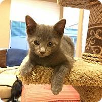 Adopt A Pet :: Grayson - San Jose, CA