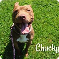 Adopt A Pet :: Chucky - Melbourne, KY