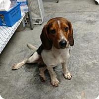 Beagle Mix Dog for adoption in Paducah, Kentucky - Adrian