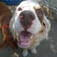 Adopt A Pet :: Oliver - Aberdeen, SD