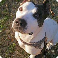 Adopt A Pet :: King - Marietta, GA
