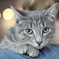Adopt A Pet :: Wolfy - Raleigh, NC