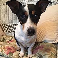 Adopt A Pet :: Jules - Toledo, OH