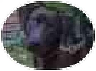 Labrador Retriever Mix Dog for adoption in Kingwood, Texas - Tank