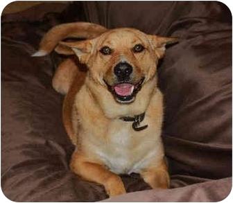 Carolina Dog Mix Dog for adoption in Hartford, Connecticut - Tyson