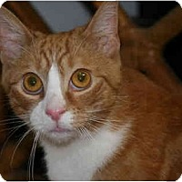Adopt A Pet :: Ricky - Jenkintown, PA