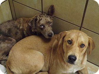 Labrador Retriever Mix Dog for adoption in Thomaston, Georgia - Mattie & Mae