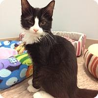 Adopt A Pet :: Roxette - Byron Center, MI