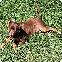 Adopt A Pet :: Dexter - Nashville, TN