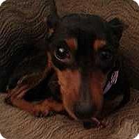 Adopt A Pet :: Kora - Columbus, OH