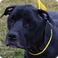 Adopt A Pet :: Oscar - Dundee, MI