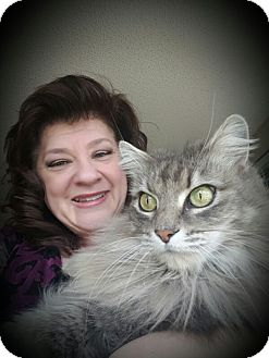 Maine Coon Cat for adoption in Yorba Linda, California - Fluffy