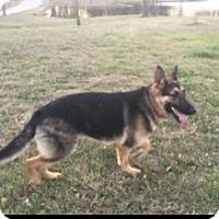 Adopt A Pet :: Comet - Fort Worth, TX