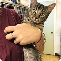 Adopt A Pet :: Ester - Toledo, OH