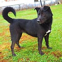 Adopt A Pet :: Little Debbie - Washburn, MO