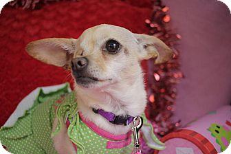 Chihuahua/Dachshund Mix Dog for adoption in San Antonio, Texas - Ida