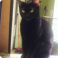 Adopt A Pet :: MIDNIGHT - Cleveland, MS