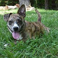 Adopt A Pet :: Big Foot - Mebane, NC