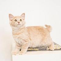 Adopt A Pet :: Lulu - St. Paul, MN
