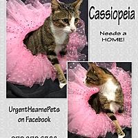 Adopt A Pet :: Cassiopeia - Hearne, TX