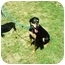Photo 2 - Doberman Pinscher/Labrador Retriever Mix Dog for adoption in Santee, California - Layla