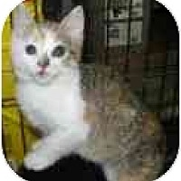 Adopt A Pet :: Cleo - Jacksonville, FL