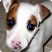 Adopt A Pet :: Baby Monroe - Oakley, CA
