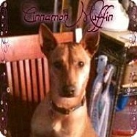Adopt A Pet :: Cinnamon - Hancock, MI