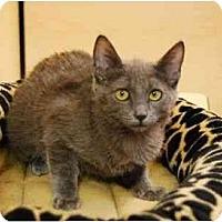 Adopt A Pet :: Hilary - Modesto, CA