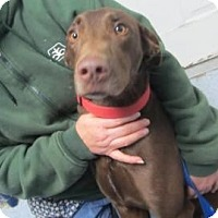 Adopt A Pet :: Bella (ADOPTED!) - Chicago, IL