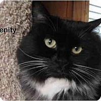 Adopt A Pet :: Serenity - Portland, OR