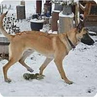 Adopt A Pet :: Taz - Hamilton, MT