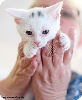 Domestic Shorthair Kitten for adoption in Huntsville, Alabama - Remington