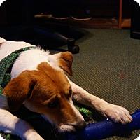 Adopt A Pet :: Gracie - cedar grove, IN