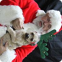 Adopt A Pet :: Bello - Rockwall, TX