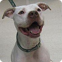 Adopt A Pet :: Walker - Red Wing, MN
