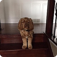 Adopt A Pet :: Chance - Caledon, ON