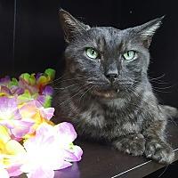 Adopt A Pet :: Storm - Albemarle, NC