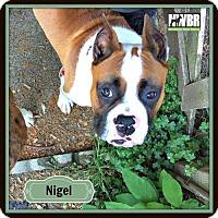 Adopt A Pet :: Nigel - Woodinville, WA