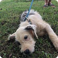 Adopt A Pet :: Ricky - Washington, DC