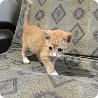 Adopt A Pet :: Dean - East Brunswick, NJ