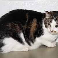 Adopt A Pet :: Ryleigh (Spayed & Declawed) - Marietta, OH